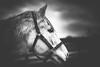alphabet soup (shane holsclaw) Tags: horse horseportrait breedercup kentucky lexington stallion
