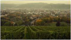 Trier in the fog (Heinze Detlef) Tags: weinreben trier weinregion tal nebel rebstöcke pflanzen häuser stadt