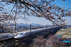 PhoTones Works #9727 (TAKUMA KIMURA) Tags: photones sigma sd quattro h takuma kimura 木村 琢磨 風景 景色 自然 landscape nature snap 桜 cherry sakura blossom