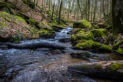 Karlstalschlucht (Dr. Gonzo78) Tags: rheinlandpfalz karlstalschlucht moos laub natur trippstadt deutschland pfälzerwald landschaft