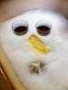 Schiumetto (albi_tai) Tags: pareidolia faccina alieno schiuma faccia lavello albitai albimont samsung s7 figofono
