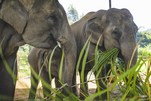 BMP Elephant Care