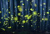 flying, floating and shining on (Kuanying Fu) Tags: firefly mist mountain bamboo lowlight stack layers longexposure iso1000 wideopen standard prime taiwan april spring outdoor dark night