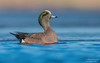 American wigeon (Male) (salmoteb@rogers.com) Tags: bird wild outdoor nature wildlife american wigeon male duck ontario canada toronto lowangle water pond