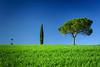 Tree is the Magic Number (DSC7677) (DJOBurton) Tags: tuscany italy spring toscana primavera valdorcia siena cretesenesi sanquiricodorcia torrenieri cypress