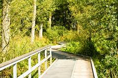 Jungle path (IBU-TT.1) Tags: bourgoyen natuur nature gent ghent belgium