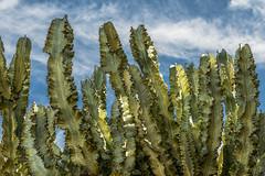 Looking Up (Hanna Tor) Tags: plant desert sky nature flora hannator