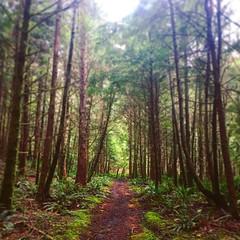Arch Cape, Oregon (coltera) Tags: forest nature oswaldweststatepark oregon hike hikingtrail hiking oregoncoast
