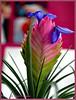Blues for one (magritknapp) Tags: pflanze wand plant wall mur végétal pared de la planta parede da impianto muro installatie muur växt vägg plante væg roślinka tarcza kija