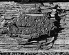 IMGP2001 (agianelo) Tags: wood texture abstract rock cracked dirt monochrome bw blackandwhite