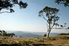 King Spur views (misty1925) Tags: kingspur northeastvictoria dargohighplains devilshollow eucalyptus gumtree snowgum