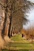 path (Alex Chirila) Tags: canoneosm10 ef70300mmf456isusm path road sunny day