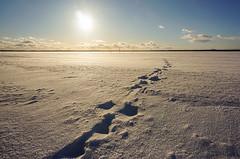 Lake Pyhäselkä - Finland (Sami Niemeläinen (instagram: santtujns)) Tags: joensuu suomi finland pohjoiskarjala north carelia talvi winter lumi snow luonto nature sunset auringonlasku noljakka aavaranta sun aurinko fozen ice