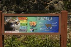 DSC_3666 (ucumari photography) Tags: ucumariphotography zoo miami fl florida march 2018