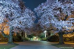UW Quad 3 (BobbyFerkovich) Tags: universityofwashington quad cherry trees full moon night long exposure