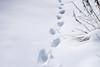 Aprilli üllatus (Jaan Keinaste) Tags: pentax k3 pentaxk3 eesti estonia loodus nature lumi snow jäljed traces 20180403