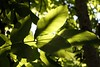 Green (De Rode Olifant) Tags: green marjansmeijsters cof020dmnq cof020pasc quote federicogarcialorca