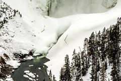 Yellowstone NP Trip - Day 4 (75) (tommaync) Tags: yellowstone yellowstonenationalpark yellowstonenp park national february 2018 wyoming nikon d7500 ynp gaa30thanniversary nature yellowstonegrandcanyon canyon grandcanyon ice upperwaterfalls snow water waterfall
