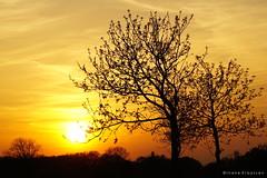 Sunset (Ineke Klaassen) Tags: sunset sundown sun zonsondergang sonnenuntergang coucherdusoleil zon geel yellow silhouet evening avond silhouette silueta sony sonyimages sonya6000 sonyalpha sonyalpha6000 sonyilce6000 ilce mirrorless sky skies 1025fav 10faves dusk 5075fav 50100fav 50fav 50faves 55faves 60faves 1000views