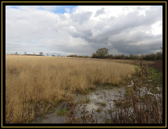 Shireoaks Wetlands Reserve (M E For Bees (Was Margaret Edge The Bee Girl)) Tags: shireoaks nottinghamshire countyside winter water wet brown grass clouds trees reserve landscape white blue grey canon nature