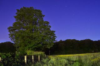 Wenvoe Meadow