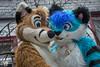 DSC_0228 (BerionHusky) Tags: fursuit mascot costume monschau furry fur