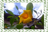 """""""The yellow flower and the blue sky ..."""" (Guilherme Alex) Tags: flower life world green city buildings nature naturaleza natural frame square walking garden secret sky sun sunnyday wood great nice picture amazing found leaf leaves plants clouds focus yellow live teofilootoni minasgerais brazil yeah lovedit my digital digitalcamera angle perspective samsung dv100 colorful exploring building landscape light contrast"""