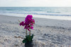 Happy Easter Monday! (beyondhue) Tags: orchid bloom flower plant beach southwest florida beyondhue shore shells sand wave horizon purple pink travel usa