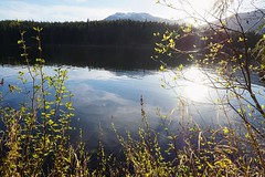 Tranquility (Alanna's Photos) Tags: sonya5000 sony nature summer tranquility tranquil calm sunset lakedays lake squamish beautifulbc throughherlens