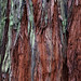 Humboldt Redwoods 3-18 #8