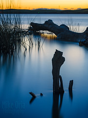 Blue (mikeSF_) Tags: californialbrannanisland mackenson piling wood tree mikeoria outdoor longexposure nd neutral density hoya 9stop dfa90 9028 90mm wwwmikeoriacom mikeoriaphotography pentax 645 645z pentax645z sacramentoriver sacramento pier tide blue twilight sunset water waterfront river riverbank