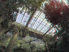 Victoria-Regina kas Blijdorp Rotterdam 3D (wim hoppenbrouwers) Tags: blijdorp rotterdam 3d anaglyph stereo redcyan victoriareginabassin victoriareginakas greenhouse