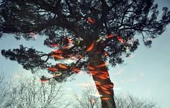 untitled by Black Napkin -