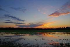 Dopo la pioggia (parte seconda) (stefano.chiarato) Tags: pioggia pozzanghere campi campagna sky tramonto sunset clouds reflections riflessi novamilanese brianza lombardia italy pentaxart pentax pentaxlife pentaxk70