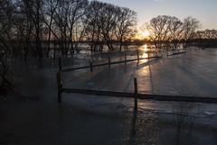 flood (Rambynas) Tags: lithuania lietuva landscape flood ice rambynoregioninisparkas nemunas sunset fence
