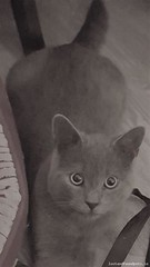 [Reunited] Mon, Mar 19th, 2018 Lost Male Cat - Aideen Drive, Dublin 6w (Lost and Found Pets Ireland) Tags: lostcataideendrivedublin lost cat aideen drive dublin march 2018