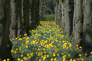 Yellow row at Haslam Park