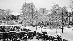 sieht so Frühling aus? / looks so spring? (p.schmal) Tags: olympuspenf hamburg farmsenberne frühling schnee