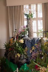 2018 JOS Show-0491 (tbottom) Tags: jos jacksonvilleorchidsociety jimroberts macrivenbark macsorchids staugustineorchidsociety suebottom floridasuncoastorchids thanhnguyen artrussell terrybottom orchids orchidsociety orchidshow orchidpictures cattleyas dendrobium oncidiums phalaenopsis