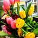 Beaming Tulips