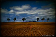 Six Trees... (SHADOWY HEAVEN Aya) Tags: 12052990a0231 tokyocameraclub igers igersjp phosjapan picsjp 日本 北海道 ファインダー越しの私の世界 写真好きな人と繋がりたい 写真撮ってる人と繋がりたい 写真の奏でる私の世界 空 雲 coregraphy japan hokkaido monochrome mono monotone blackandwhite bw bnw blackwhite noiretblanc japaninbw outdoor landscape paysage cloud clouds sky