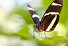 Breathing Space (dianne_stankiewicz) Tags: butterfly longwing pause bokeh resting balance nature insect wildlife breathingspace
