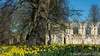 The ruins of St Marys Abbey in York (keithhull) Tags: stmarysabbey ruins york historic monastery daffodils spring