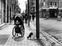 Spring (tiitkbi) Tags: streetphotography street girl dog circus