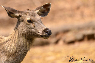 Deer Safari, Anna Zoological Park