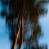 In The Pines 004 (noahbw) Tags: d5000 icm nikon abstract blur forest hellernaturecenter intentionalcameramovement motion movement noahbw treetrunk trees winter woods