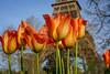 An orange Spring (julialarrigue) Tags: france flowers eiffeltower eiffel