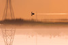 CWC 645, Mambakkam (Raghunathan Anbazhagan) Tags: india tamilnadu nature chennai chennaiweekendclickers mambakkam travel travelphotography naturephotography cwc cwc645 morning sunrise birds swim water lake dawn