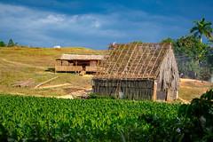 Progress (Warren Pedersen) Tags: vinales tobacco plantation cuba cigars viñales construction barn field rural farm plants