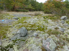 Grass, Moss, & Rock 1 (geodeos) Tags: sheffieldconservationarea canadianshield granite rock stone moss grass lichen forest tree scenery nature